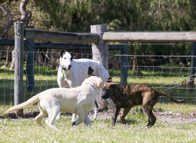 Our greyhound, Flip, supervising the young ones!