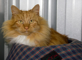 I want breakfast now!